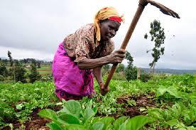 Farmers urged to adopt modern technology | Photos