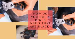 clipping dark nails