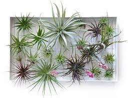 8 shower plants that want to live in
