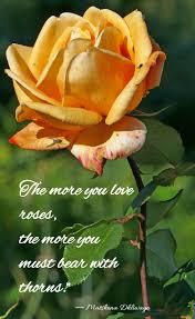 r tic rose quotes best rose love quotes images