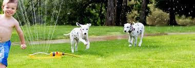 Easy Troubleshooting Tips For Dogwatch Hidden Dog Fence