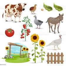 Farm Field Animals And Vegetables Agriculture Stock Illustration Download Image Now Istock