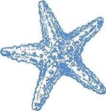 Amazon Com Pretty Delicate Light Blue Sea Ocean Life Cartoon Art Vinyl Decal Sticker 4 Wide Starfish Arts Crafts Sewing