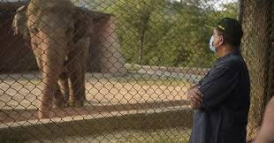 Elephant Kept In Chains In Pakistan Is Released After 35 Years Living