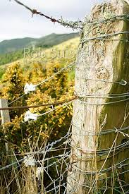 Old Farm Fence Post Strainer Post New Zealand Nz Stock Photo From New Zealand Nz Photos And Stock Photography By Rob Suisted