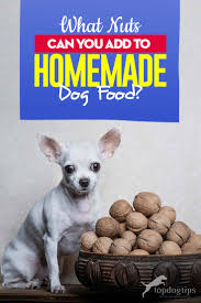 nuts to homemade dog food recipes