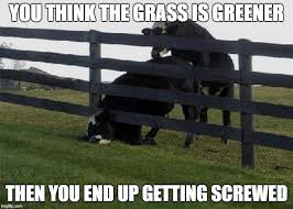 Image Tagged In Cow Stuck In Fence Imgflip
