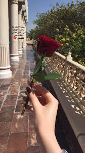 Red Roses Beautiful Arabic Words Arabic Quotes Girly Pictures