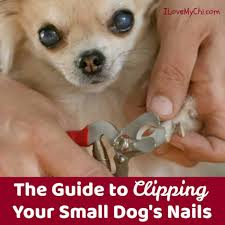 clipping your small dog s nails