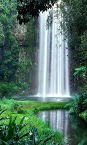 free jungle waterfall live wallpaper