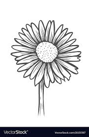 black and white daisy flower royalty