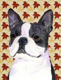 boston terrier fall leaves portrait