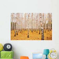 Amazon Com Wallmonkeys Fot 9962903 48 Wm254844 An Autumn Birchwood In October Peel And Stick Wall Decals 48 In W X 32 In H Extra Large Home Kitchen