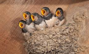 What to Do If You Find a Baby Bird - Woodland Trust