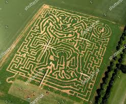 Britains Maize Maze Craze giant dog designed Editorial Stock Photo - Stock  Image | Shutterstock