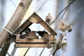 construire une maison d oiseau lui même