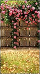 40 Best Rose Fence Ideas In 2020 Beautiful Gardens Dream Garden Cottage Garden