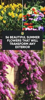 56 beautiful summer flowers that will