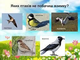 Птахи навесні - презентация онлайн