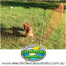 Thunderbird 50m Roll Poultry Thundernet Electric Fence Australia