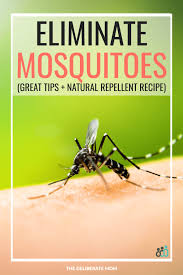 mosquitoes homemade mosquito repellent