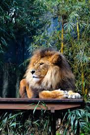 صور حيوانات Hd شاهد اجمل صور حيوانات قبلات الحياة