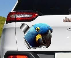 Wandtattoos Wandbilder I Heart Parrots Love Bird Pet Parrot Car Window Vinyl Decal Sticker 01008 Fiscleconsultancy Com