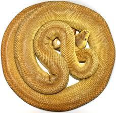 carpet python plex morphs