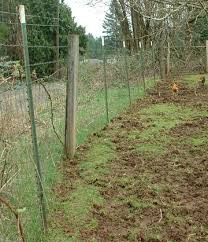 Fencing For Guinea Hogs Agha