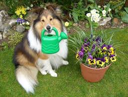 gardening and your pet ontario spca