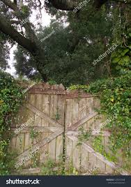 Weathered Wooden Fence Wild Vines Growing Stock Photo Edit Now 1232312368