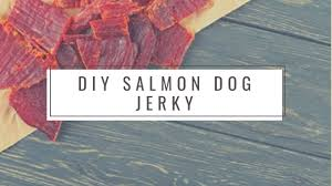 homemade salmon dog treats you