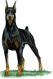 Decals Stickers Patches Sporting Goods Doberman Pinscher Lover Large Breed Dog Vinyl Decal Car Home Truck Suv Boat Rv