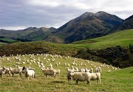 Counting Sheep Wikipedia
