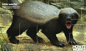 You are a CEO. You are a honey badger ...