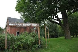 Image result for waupoos farm