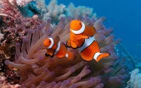 marine aquarium live wallpaper 1 1 free