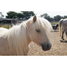 We Love Ponies at Redwings Horse Sanctuary - Ada Cole Visitor Centre - What  To Do With The Kids