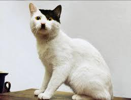 شاهد أجمل صور القطط التي اشتهرت بشكل ولون علامات شعرها الرائع