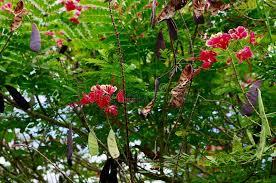 princeville botanical gardens kauai