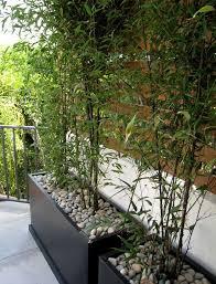 Bamboo Design Ideas Pictures Remodel And Decor Bamboo Garden Terraced Landscaping Outdoor Gardens
