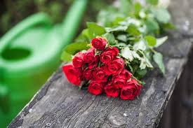 اجمل صور الورد الجمال يتكلم بحب كلمات جميلة
