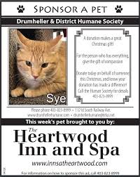 pet of the week sye drumer