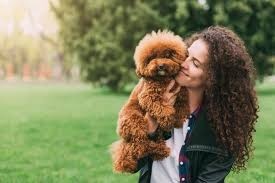 poodles as pets cost life expectancy