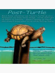 Post Turtle Art Board Print By Chassinklier Redbubble