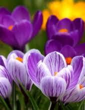 Hilda A Graham Obituary - Visitation & Funeral Information