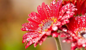 40 beautiful flower wallpapers free to