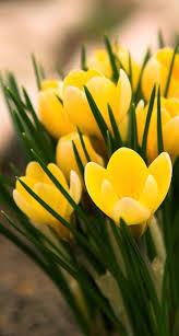 ورود صفراء Fleurs Jaunes Fleur Jardin Fleurs Et Fruits