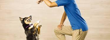 Petsmart Puppy Training Classes Petsmart