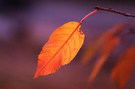 Free photo Fall Foliage Autumn Autumn Colours Colorful Leaves - Max Pixel